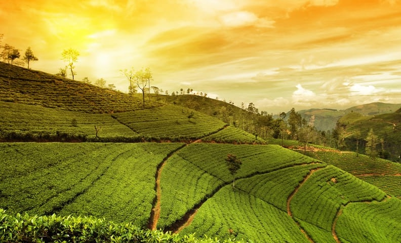 India's Original Tea City